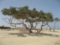 Mangroven vorm Wadi Lahami