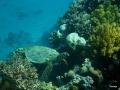 Schildkröte auf der Wanderschaft