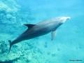 Delphin steigt auf