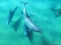 Drei Delphine am Grund