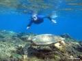 Taxingo mit Schildkröte