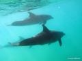 Drei Delphine
