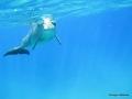 Delphin kommt auf uns zu