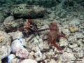 Fesselspiele der Kraken