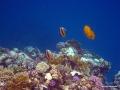 Wunderschönes Korallenriff