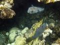 Igelfisch in einer Höhle