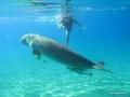 Babsy und das Dugong