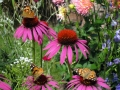 Schmetterlingsparty
