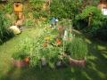Sommergarten mit vielen Blumen