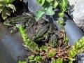 Die Froschies nehmen ein erstes Sonnenbad