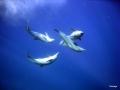 Delphine beim Liebesspiel