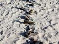 gefundene Schuhe - Parade am Strand