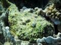 Der Steinfisch am Utopia