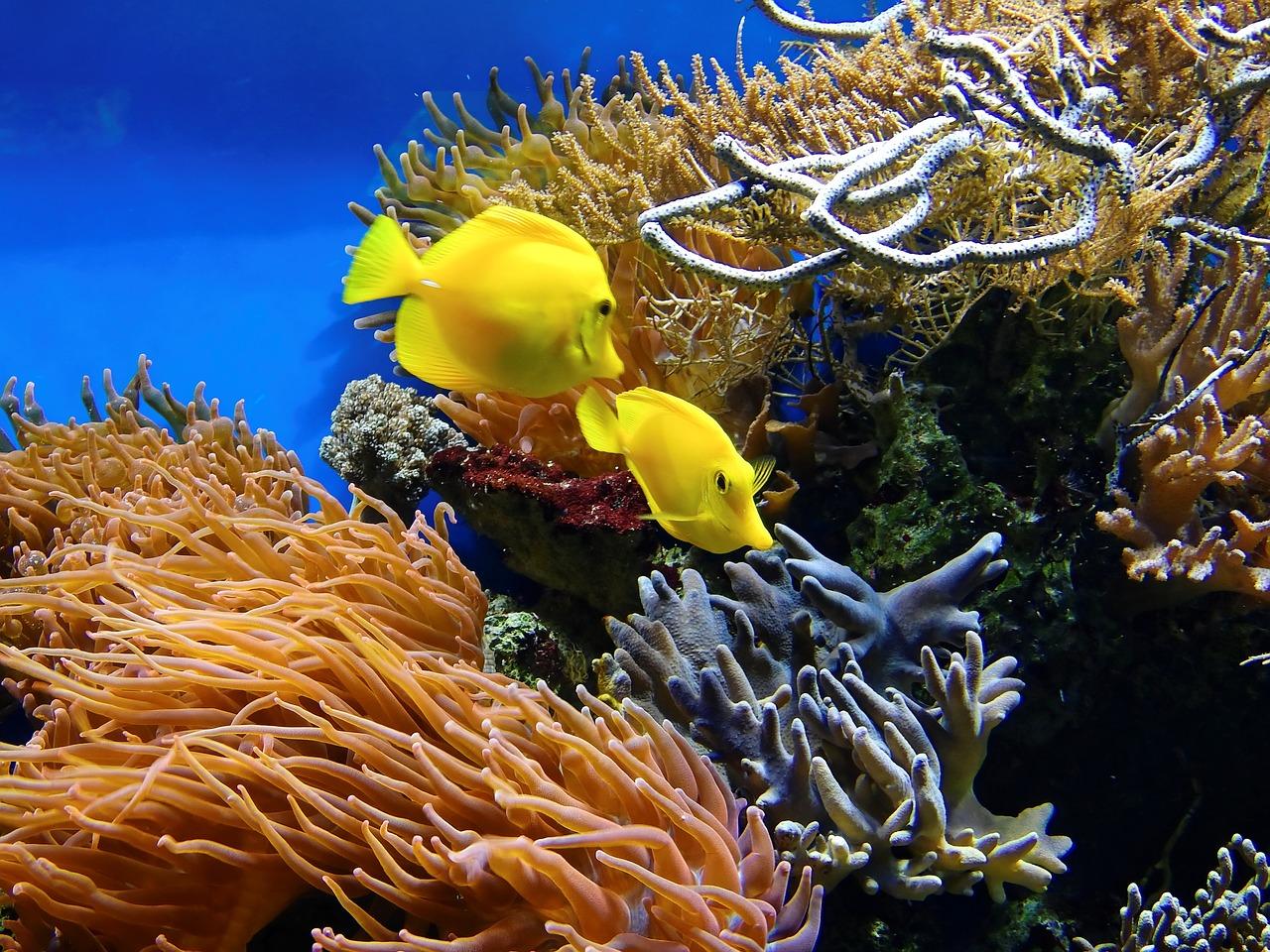 Es ist an der Zeit wieder die Korallengärten zu besuchen.