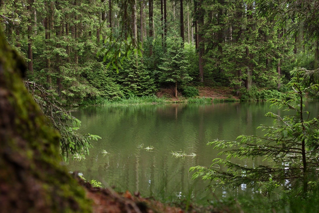 Ruhepol Waldsee- Harzer Domizil